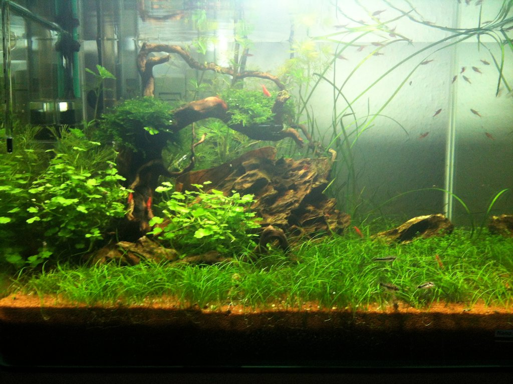 Mon Scaper's Tank 50L Aquascaping - Page 2 309387IMG0448