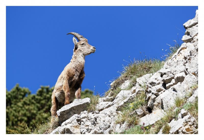 La faune du Pas de l'Aiguille 309724FJ8I4276DXO