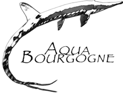 Forum des Aquariophiles de Bourgogne