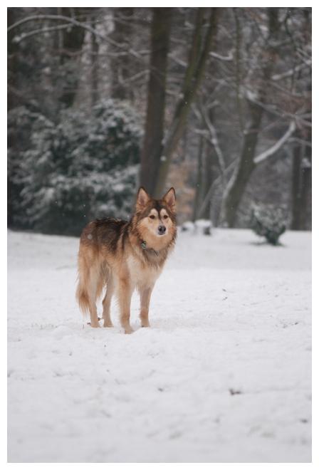 Nos loups grandissent, postez nous vos photos - Page 9 311276DSC5065640x480