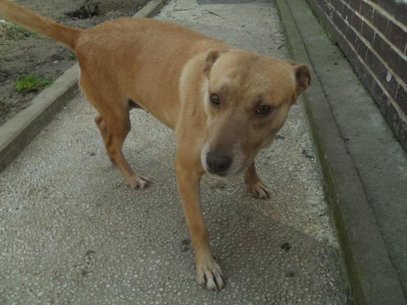 Tina, chienne sauvée de la rue, née en avril 2010  311570Tina10mars2015