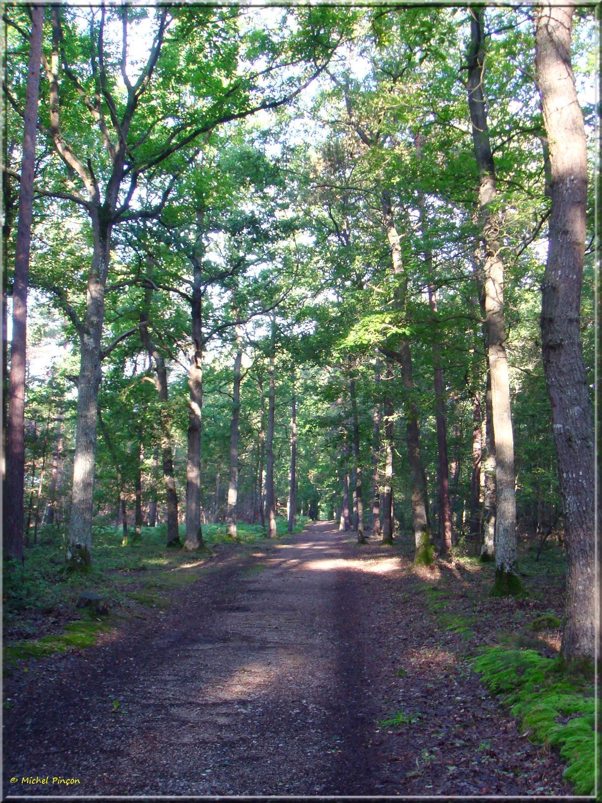 [fil ouvert] la forêt dans tous ses états - Page 15 314531DSC013797