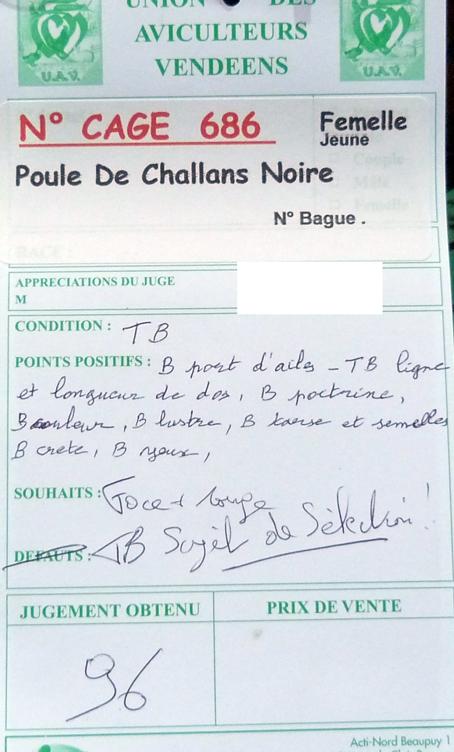 poule - Poule de Challans - standard 315785P1120157