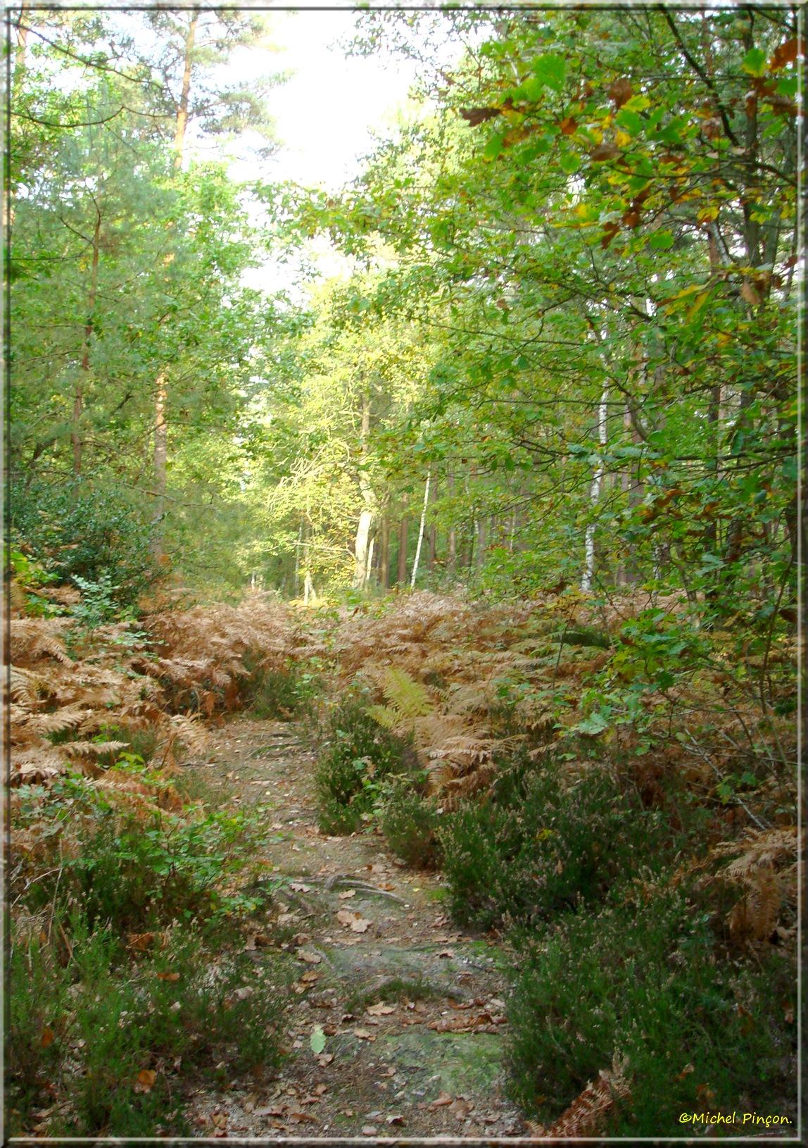 [fil ouvert] la forêt dans tous ses états - Page 15 321707DSC013986