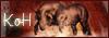 Kingdom of Horses 323040bannire100x35