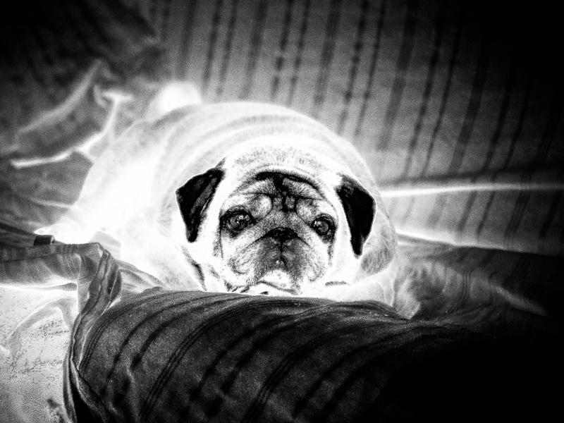 Aieeee!  wanna be your radio actif... dog !  324241boulette13