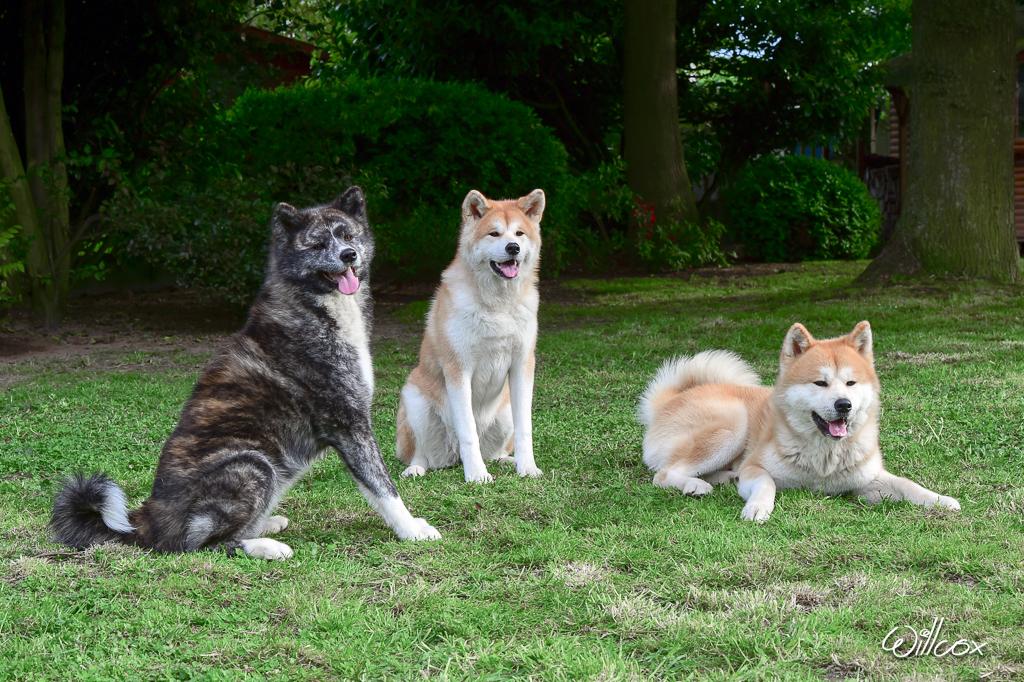 [fil ouvert] Les chiens, nos amis 330685CMA42301