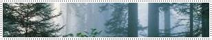 La Forêt de Sagwir
