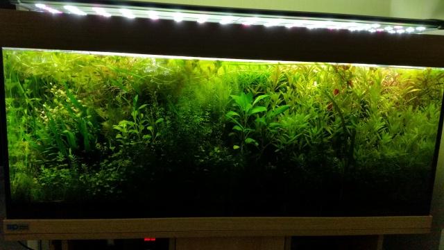 Mes (plus) de 60 plantes dans mon 240 litres - Page 4 33396920140802205204