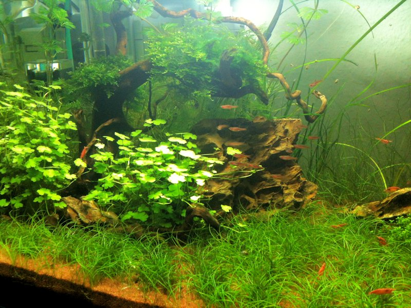 Mon Scaper's Tank 50L Aquascaping - Page 2 333978IMG0390
