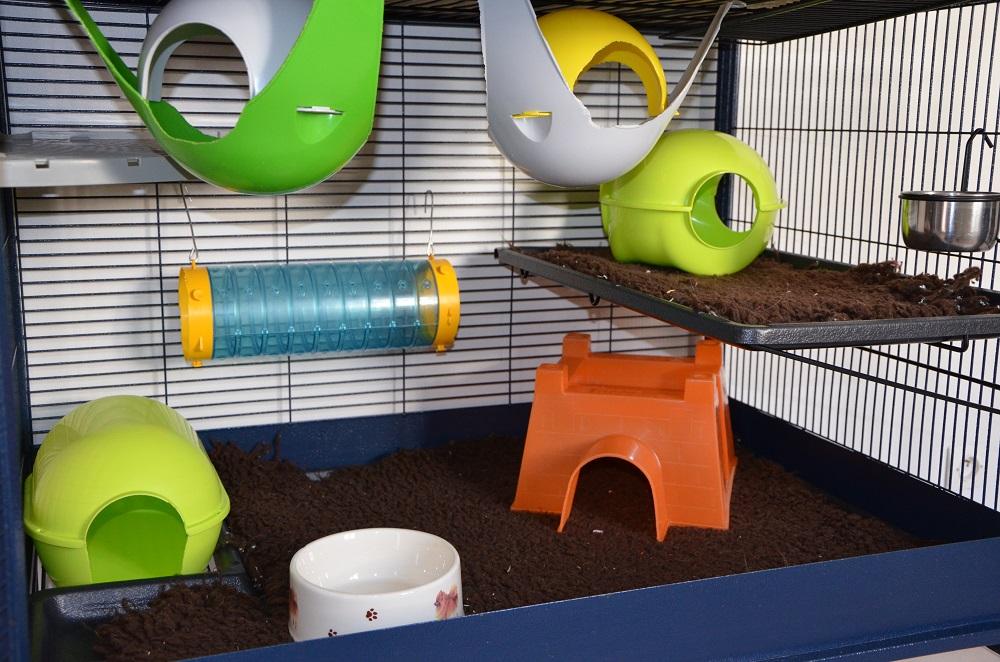 grande porte - Photos de vos cages 336463DSC4110