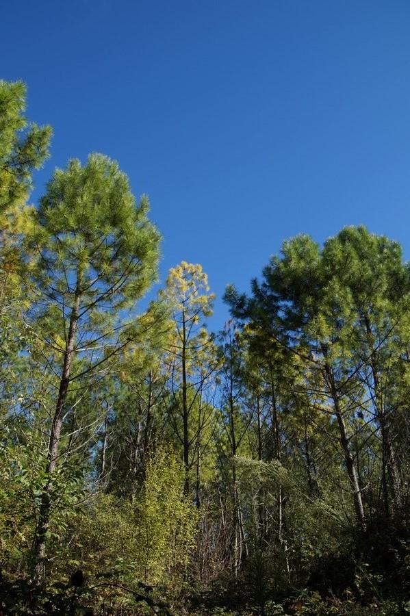[fil ouvert] la forêt dans tous ses états - Page 15 338681DSC07741