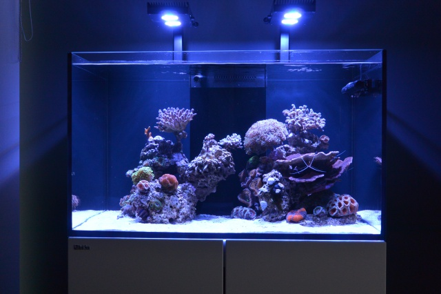 Re: Redg's paradise reef 341385DSC3071