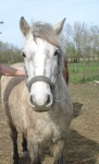 Sauvetages et adoptions Avril 2016 346730733623arrivedeRodeo31mars2014009