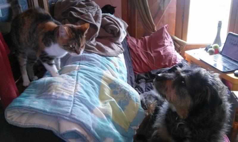 DUCHESSE - chatte femelle, née 2011/2012, borgne - (PASCANI) - adoptée par Chantal Pascal (dpt 63) - Page 4 3478274168