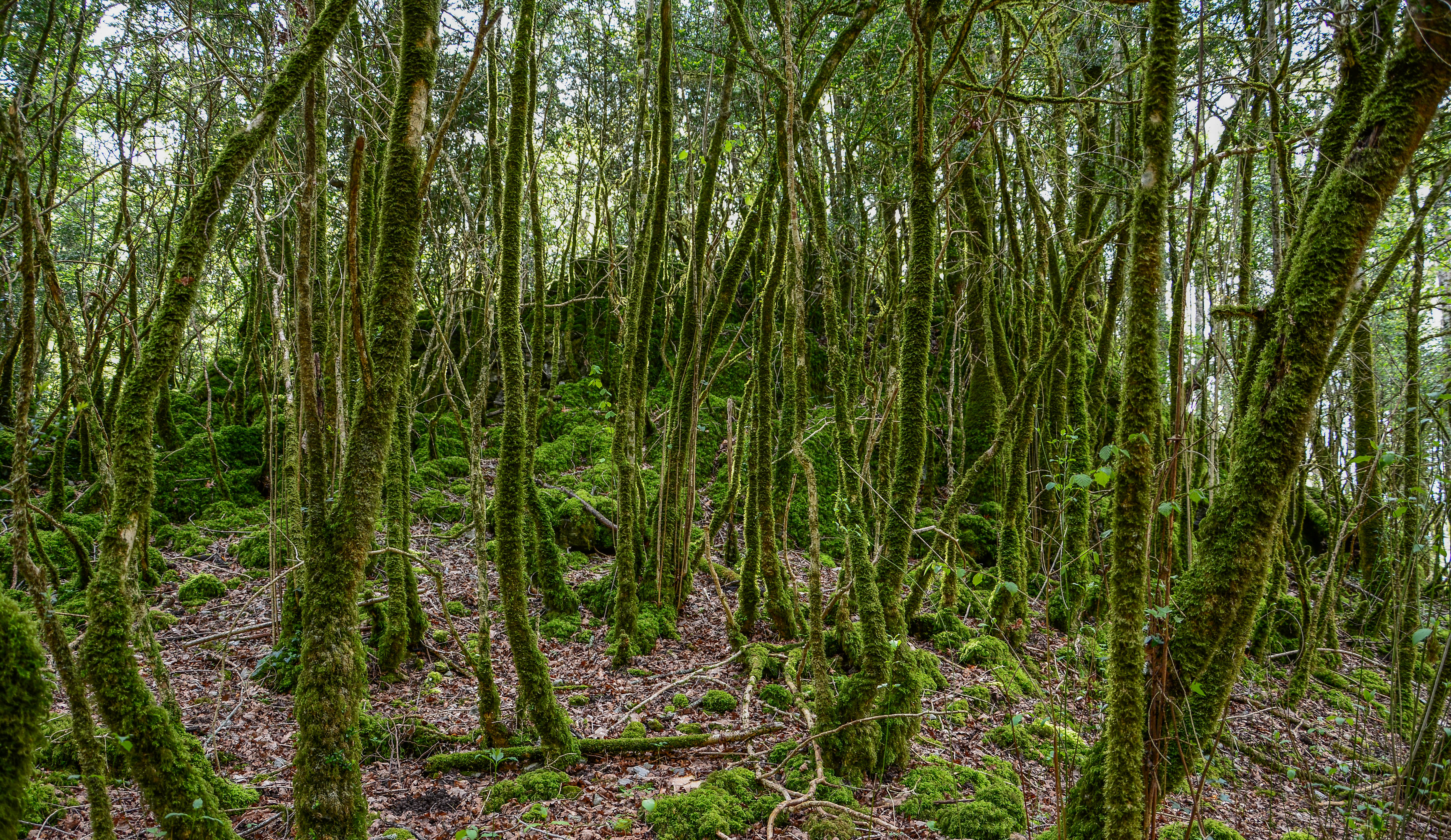 Petit tour en forêt... 348162Foret