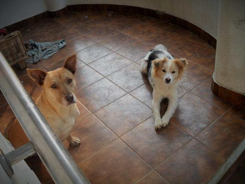 Tina, chienne sauvée de la rue, née en avril 2010  348864TinaetLacy06dbutmars2015