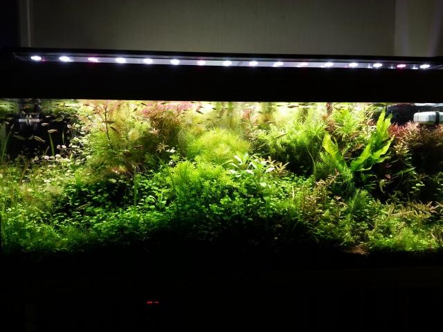 Mes (plus) de 60 plantes dans mon 240 litres - Page 3 35439520140412065453