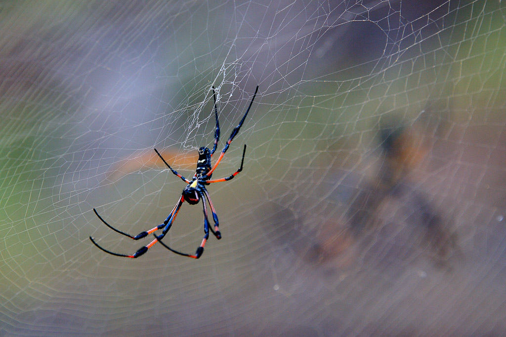 (FIL OUVERT à tous) vous aimez les araignées? 356128DSC84571311131125312
