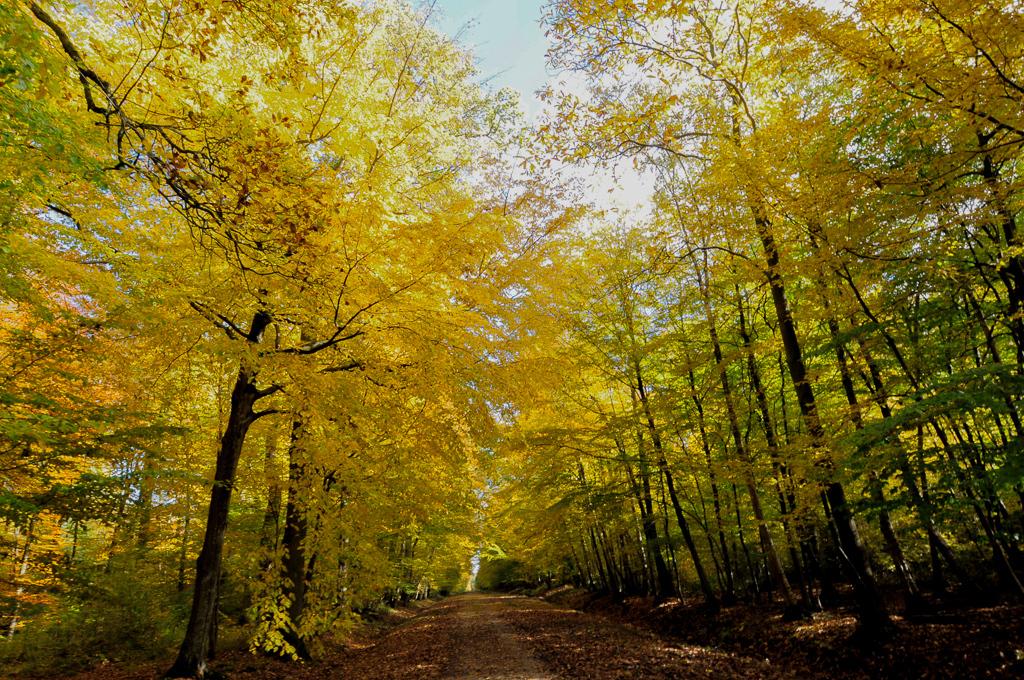 [fil ouvert] la forêt dans tous ses états - Page 2 35787731102010DSC8295sanstitre