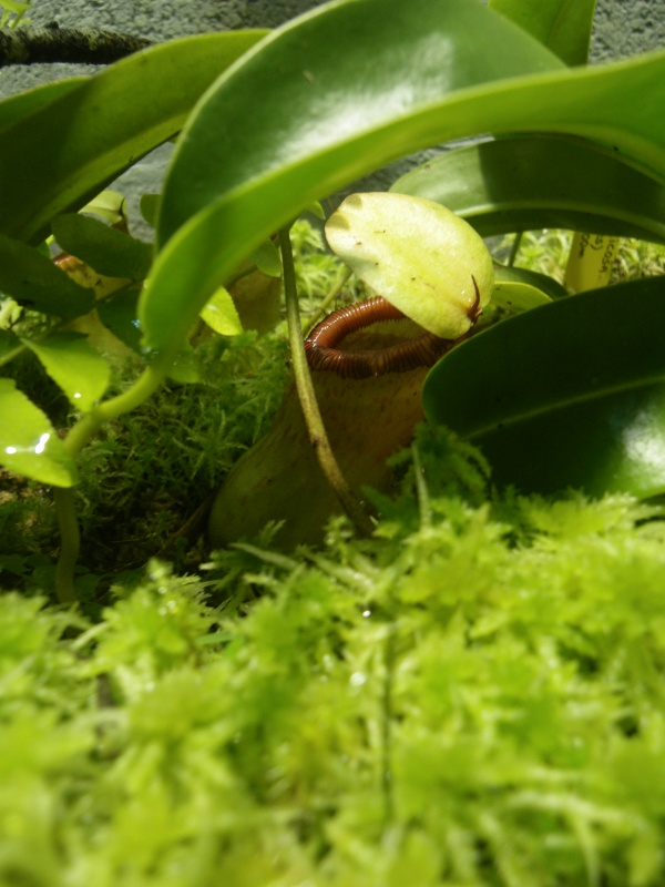 Mon terrarium highland 360071IMGP1847