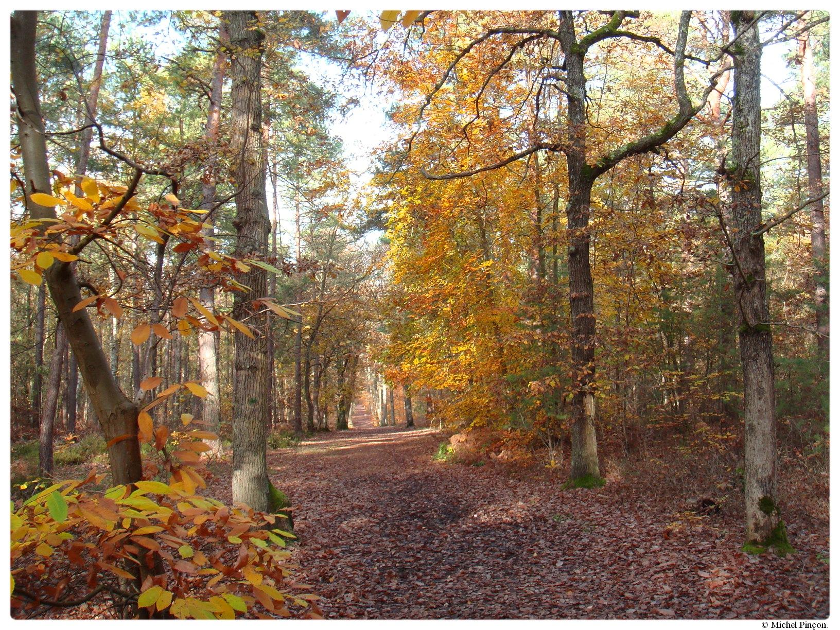 [fil ouvert] la forêt dans tous ses états - Page 17 363428DSC014383