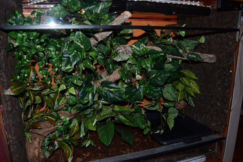 Morelia spilota variegata Irian Jaya [ Mon Wajah ] 368738DSC0051