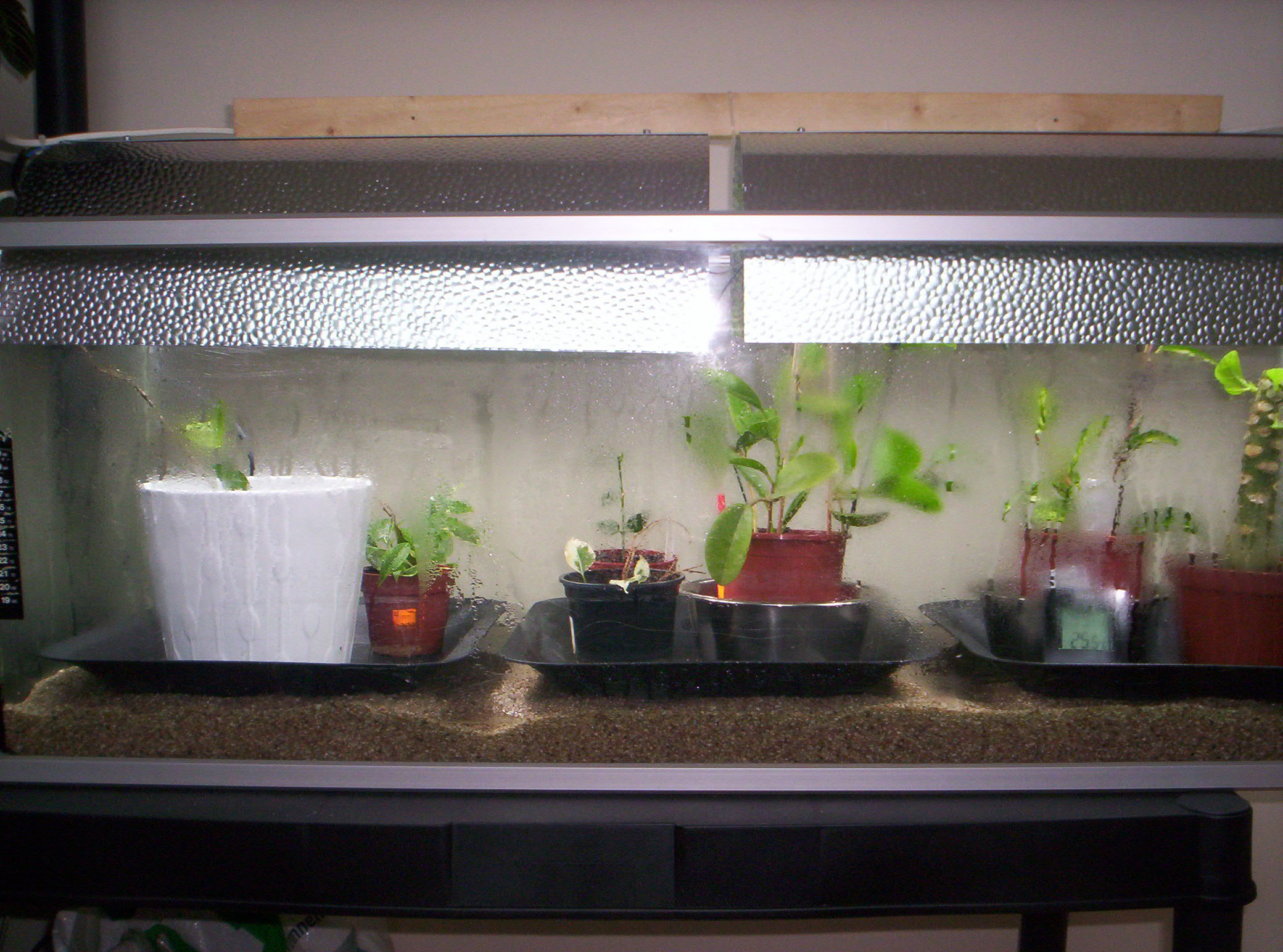 Terrarium dans un aquarium 3709031000711