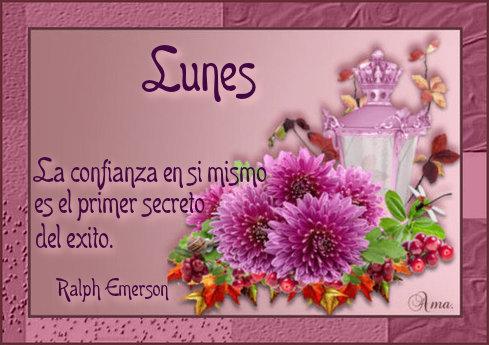 Flores con Frase 371126lunes