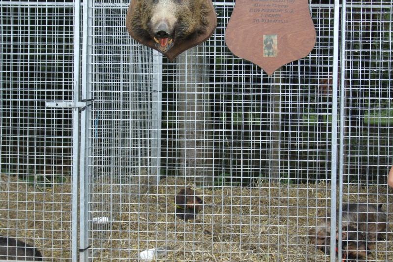 Salon de la chasse de Chateauvillain 2014 375273IMG5881