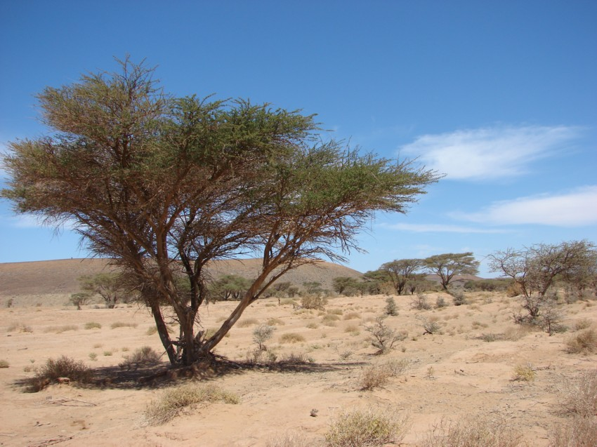Le Grand Sud du Maroc - II 375537066