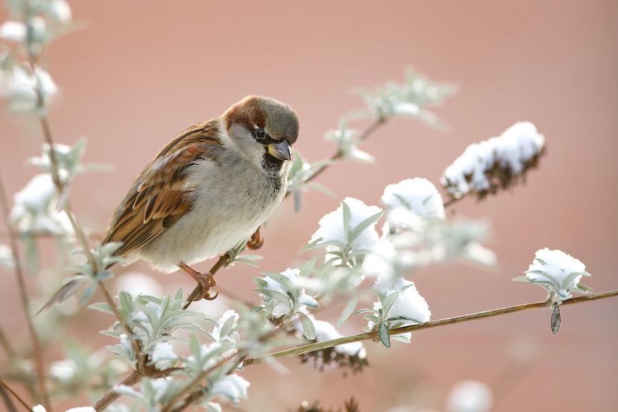 Oiseaux du jardin (màj) du 31 janvier - Page 2 376101DSC3123