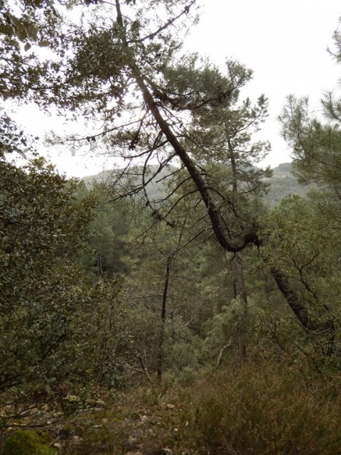 Petite ballade à travers bois... 376955DSCN0075Copier