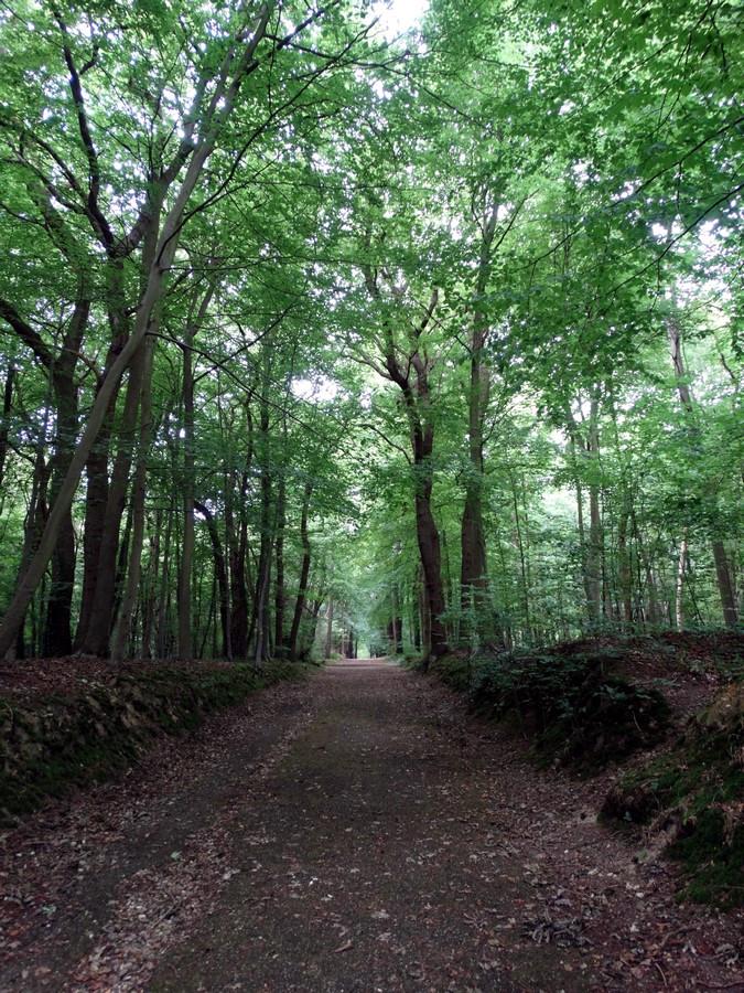 [fil ouvert] la forêt dans tous ses états - Page 14 377045004Copier
