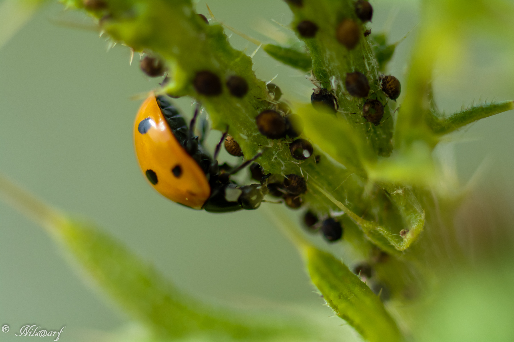Insectes et Proxi. [Fil Ouvert] 377695DSC1413DxO