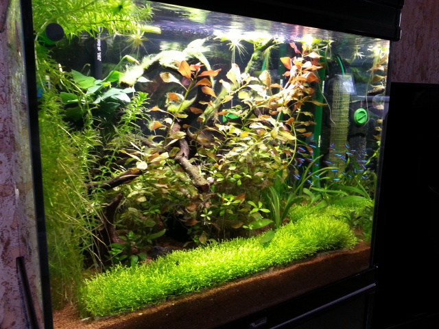 Identification plante. 37875320150302163422