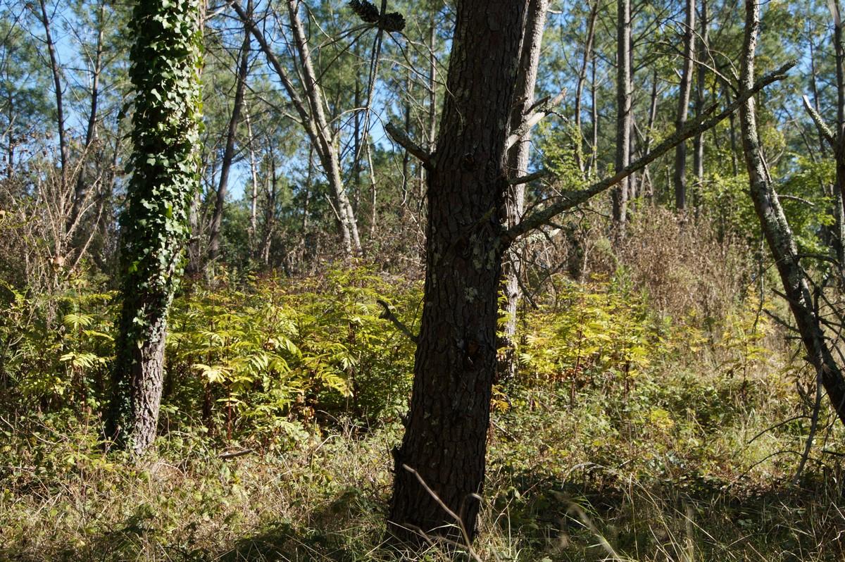 [fil ouvert] la forêt dans tous ses états - Page 15 378850DSC07746