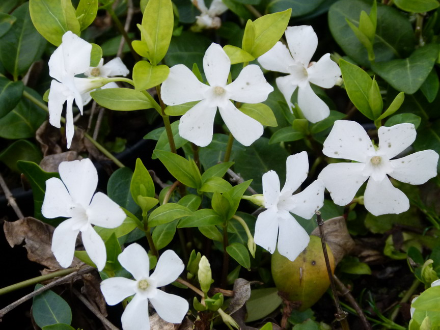 Les fleurs (ou plantes ) contre le cancer. - Page 2 38247900004412