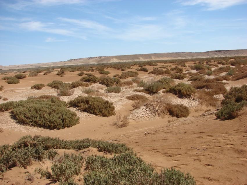 Le Grand Sud du Maroc - II 382521036