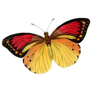 Tubes Papillon 392582Melgibson4age12