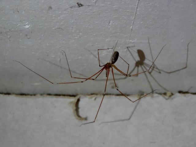 La maison des araignées 393313DSC02585