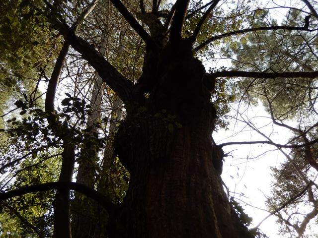 Petite ballade à travers bois... 393668DSCN0083Copier