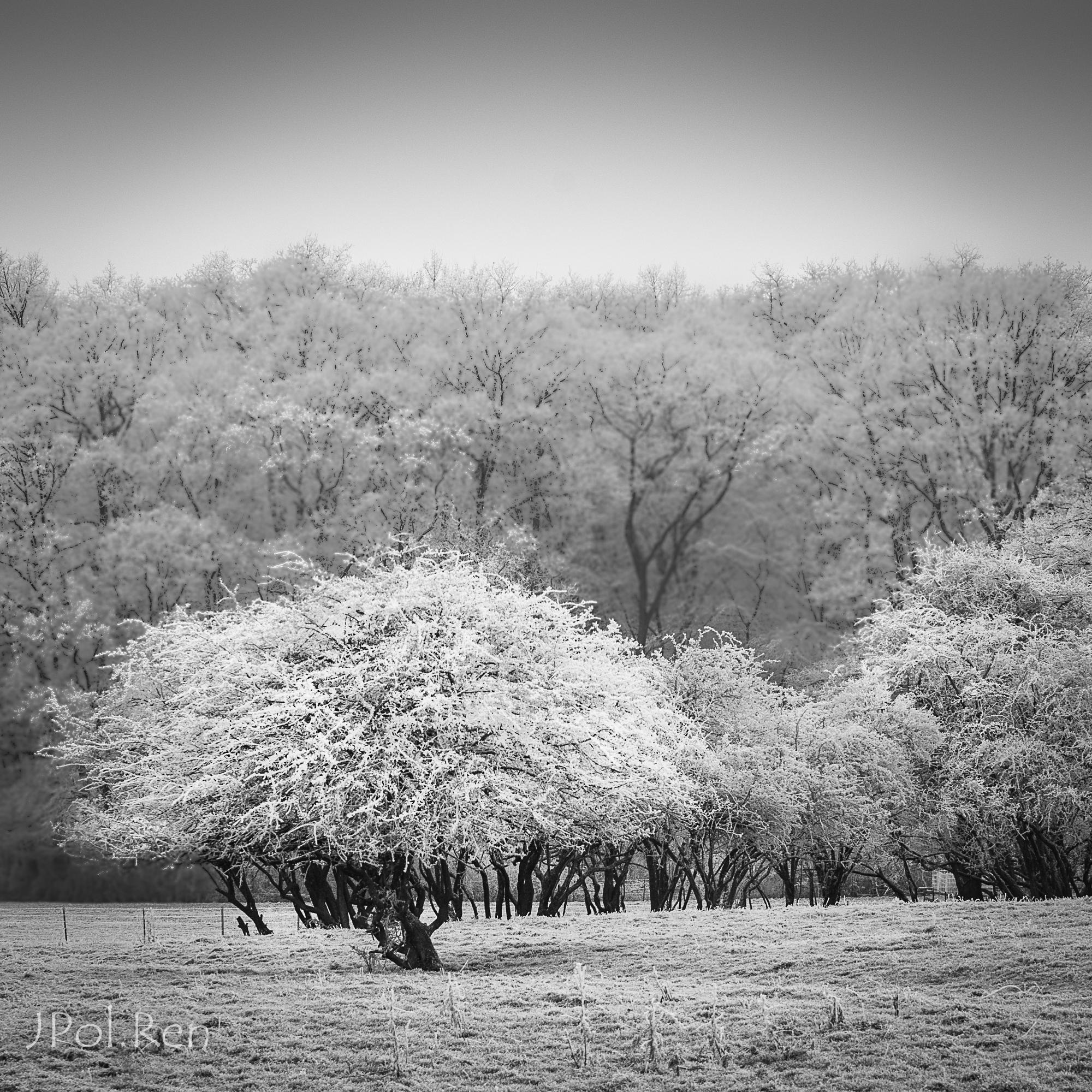Quelques arbres. 393953FL31giv2272