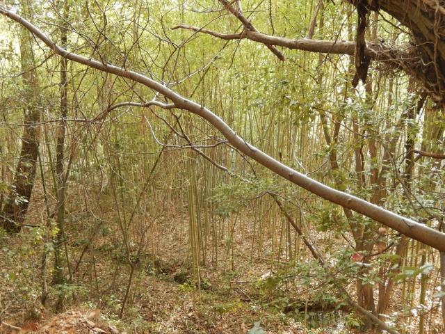 Petite ballade à travers bois... 396438DSCN0084Copier