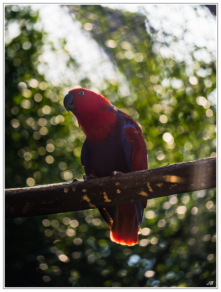 Zoo de Beauval : les oiseaux 396581LR53P1140076