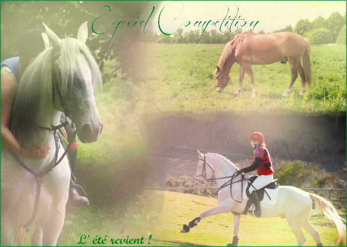 Equid Competition