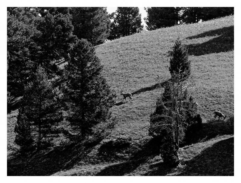 La faune du Pas de l'Aiguille 400057FJ8I4297web