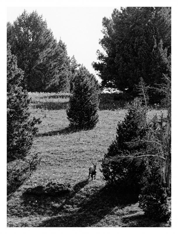 La faune du Pas de l'Aiguille 400756FJ8I4301web
