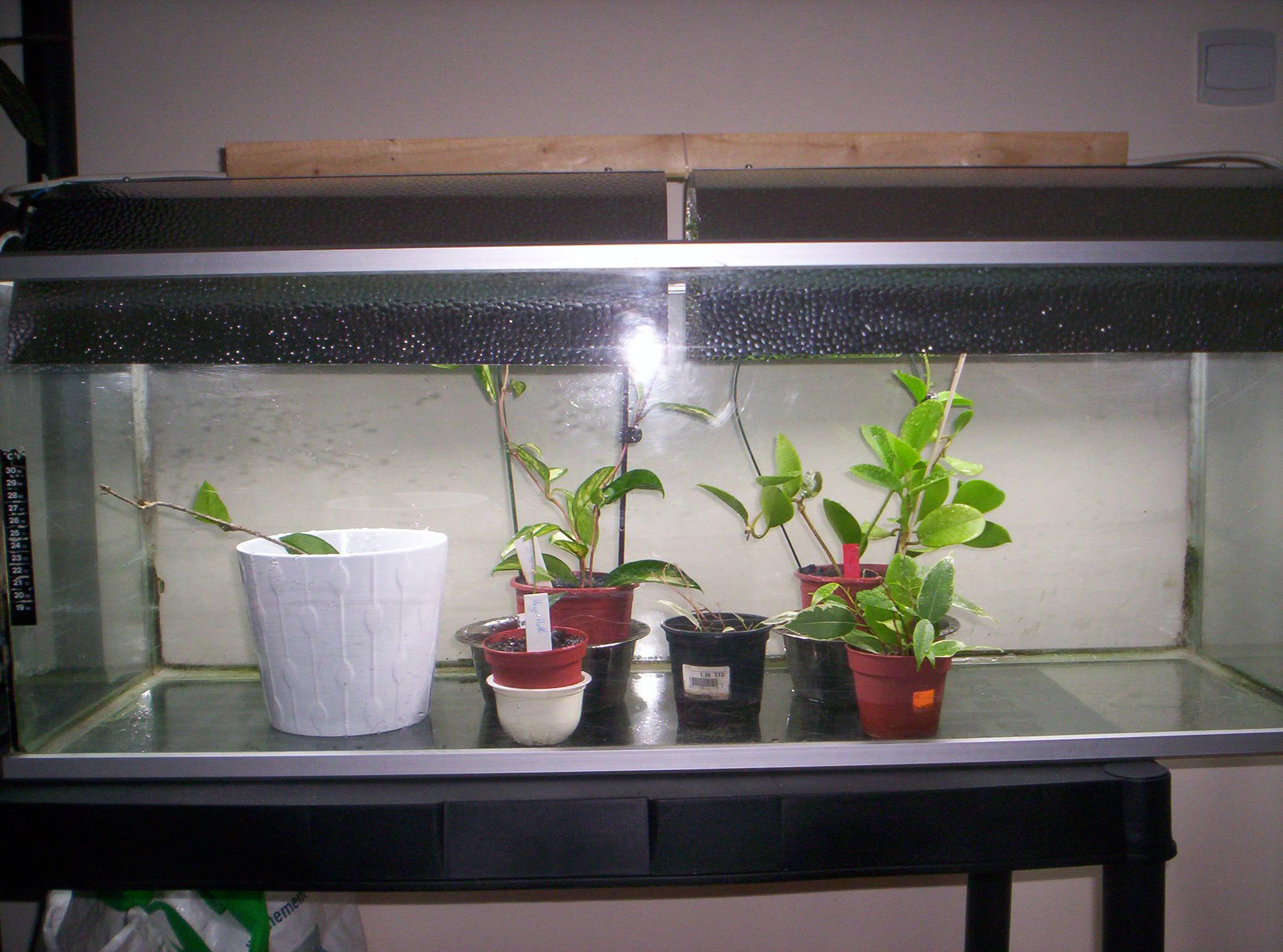 Terrarium dans un aquarium 4039841000709