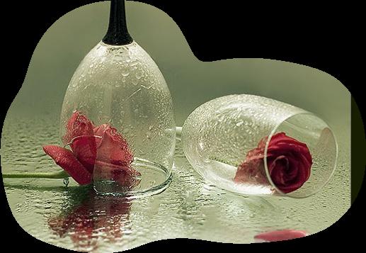 Tubes roses 409025Gibsonaf8